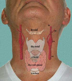 Anterior triangle of the neck as with all regions of the body your study should start out with a look at the living region being studied in the neck the following diagram points out ccuart Image collections